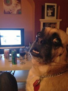 48 Hilariously Unphotogenic Animals That Were Caught At The Perfect Moment, and they couldn't be more hilarious. Take a look for yourself!