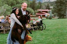 Cão com cancro morre depois de levar dona ao altar - Mundo - Correio da Manhã