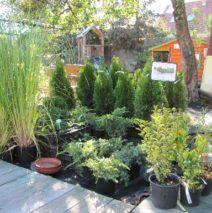 Örökzöldek ápolása – Segítség, barnulnak a ciprusaim! Plants, Flora, Plant, Planting