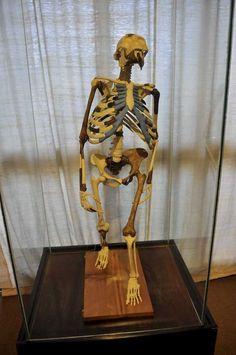 Lucy - Human Evolution. Ethiopia National Museum. See more at anoceanaway.net Addis Ababa, Human Evolution, Digital Storytelling, National Museum, Ethiopia, Night Club, Princess Zelda, Ocean, Culture