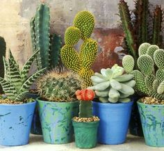 3e3129780bfdb082e5564dd830420ec2--indoor-cactus-plants-cactus-windowsill