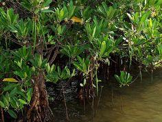 Mandovi-Zuari Wildlife Sanctuary - in Goa,India