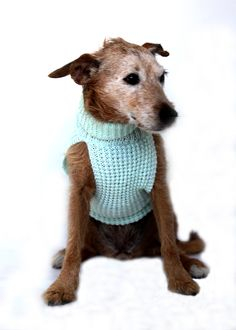 Handmade Dog Collars, Doggy Stuff, Dog Coats, Four Legged, Rescue Dogs, I Love Dogs, Cool Things To Make, Fur Babies, Hand Knitting