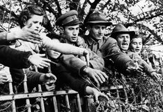 Hungarian refugees leaning over the barriers of Traiskirchen, an Austrian refugee camp. Get premium, high resolution news photos at Getty Images Hungary, Che Guevara, Pictures, Image, Photos, Photo Illustration, Resim, Clip Art