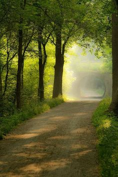 ideas for photography nature green pathways Beautiful World, Beautiful Places, Beautiful Pictures, Beautiful Flowers, Beautiful Roads, Beautiful Beautiful, Landscape Photography, Nature Photography, Park Photography