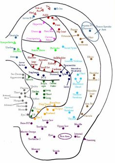 Ear Acupuncture Point Chart: