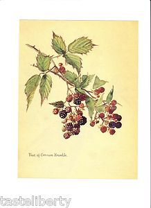 Edvardian blackberry print. Tattoo idea? 8531 Santa Monica Blvd West Hollywood, CA 90069 - Call or stop by anytime. UPDATE: Now ANYONE can call our Drug and Drama Helpline Free at 310-855-9168.