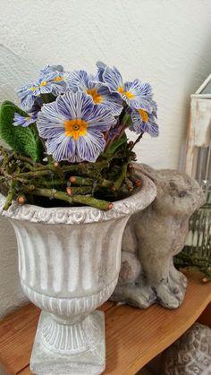 Shabby House and Garden: Hoppel blau...