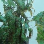 Augmented Reality Painting: Metamorphosis