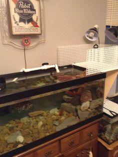 Turtle tank with diy turtle topper. Happy Animals, Farm Animals, Cute Animals, Pet Turtle, Turtle Love, Turtle Tank Setup, Turtle Tanks, Aquarium Setup, Aquarium Ideas