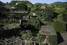 Plants grow on houses in the abandoned fishing village of Houtouwan on the island of Shengshan July 26, 2015. Just a handful of people still live in a village on Shengshan Island east of Shanghai that was once home to more than 2,000 fishermen. Every day hundreds of tourists visit Houtouwan, making their way on narrow footpaths past tumbledown houses overtaken by vegetation. The remote village, on one of more than 400 islands in the Shengsi archipela