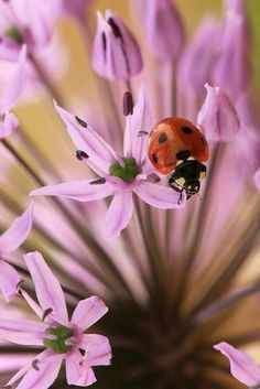 Ladybugs and Flowers.One of my favorite combos! Lady Bug, Great Photos, Cool Pictures, Garden Great Ideas, Beautiful Bugs, Little Critter, Love Bugs, Animals Of The World, Beautiful Creatures