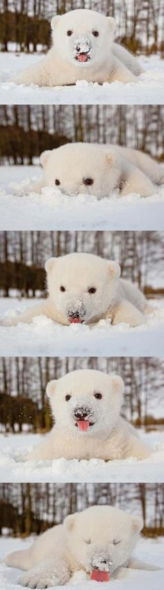 it seems at though bears like snow?!?!