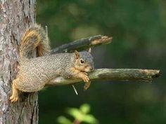 Just laying around.....