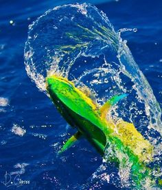 Fishing can be a great stress reliever. Find out more about fishing as a stress relieve, including tips on catching fish and staying safe. Pike Fishing, Sport Fishing, Fishing Tips, Fly Fishing, Fishing Reels, Fishing Tackle, Marlin Fishing, Fishing Stuff, Salt Water Fish