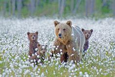 Magical Nature Tour • magicalnaturetour: Curious Cubs bytrolljenta