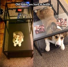 Once a Puppy, Always a Puppy // funny pictures - funny photos - funny images - funny pics - funny quotes - #lol #humor #funnypictures