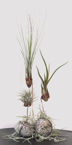 Beates-Kreative-Welten: Tillandsien/ Air Plants