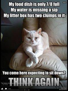 Cats Rule! Cat-Attitude! HaHa!