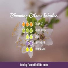 Sweet Orange Essential Oil Inhaler Recipe by Loving Essential Oils | Blooming Citrus Inhaler with orange, lime, lavender, bergamot, and petitgrain | Visit our blog for more DIY recipes and Free printable guides! Essential Oil Brands, Cypress Essential Oil, Essential Oil Safety, Sweet Orange Essential Oil, Essential Oils For Sleep, Patchouli Essential Oil, Eucalyptus Essential Oil, Lemon Essential Oils, Essential Oil Uses