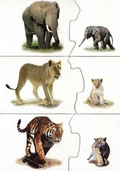 Rodzice i dzieci: słoń, lew, tygrys