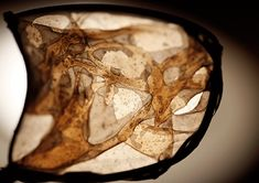 And Who Are You?A Quest For Transparent Living Materials - Fungal Futures