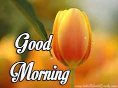 If you are looking for romantic good morning quotes & messages for your dear ones or good morning message for your friends. good morning message for her Good Morning Smiley, Good Morning Gift, Morning Message For Her, Good Morning Greeting Cards, Good Morning My Love, Good Morning Funny, Good Morning Messages, Good Morning Greetings, Morning Quotes