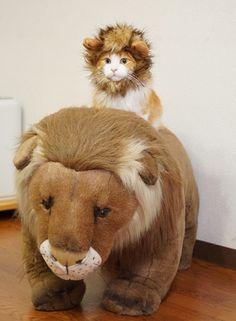 子ライオンのホワイトデー|オスカー様としもべ達