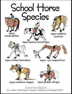 Different Types of lesson horses. Love the Latin, makes it sound funnier.