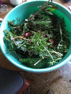 Herbas de San Xoan