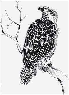 This picture doesn't belongs to me, I saw it on a japanese tattoo flash, but I don't remember the artist. I only re-drew for practise, adding something like the branch and the detalied feathers!