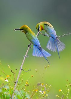 ✍️✍️ ___Hi friends, see how beautiful little birds are Let's see the names of these two birds! Kinds Of Birds, All Birds, Cute Birds, Pretty Birds, Little Birds, Beautiful Birds, Animals Beautiful, Exotic Birds, Colorful Birds