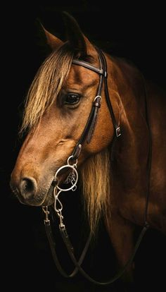 Kalianna) This is my Warmblood mare Blossom. She's a great horse and loves to jump.