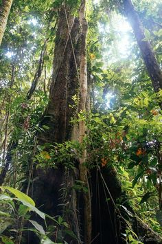 The green canopy of trees and leaves on an amazon tour in ecuador Amazon Rainforest Trees, Ecuador, Open Instagram Account, Jungle Tree, Ocean Photography, Photography Tips, Wedding Photography, Exotic Places, Paisajes