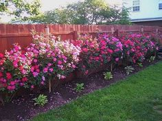 Red + Pink Knockout Roses in the backyard with hostas in front of it. Landscaping Along Fence, Landscaping With Roses, Backyard Landscaping, Landscaping Ideas, Garden Yard Ideas, Easy Garden, Garden Kids, Garden Oasis, Container Gardening