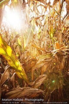 Der letzte Herbsttag – Zeit zu ernten | Inspirationen | Marion's Blog