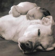For the babies the most important thing is the bed. The best bed is the dog.