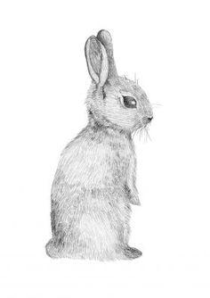 Rabbit - Fine Art Print by Kerri Ann Hulme for From the Wilde