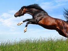 Imagenes de caballos salvajes.