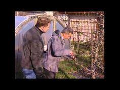 Gardening, Baseball Cards, Garden, Lawn And Garden, Yard Landscaping, Urban Homesteading