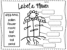 Label a Flower