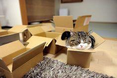 gatti-accucciati-017