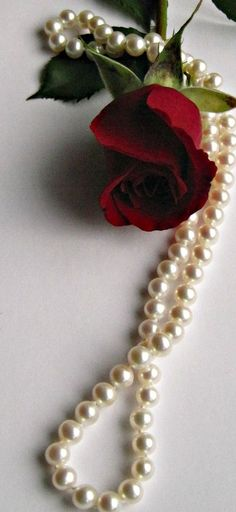 Pearl necklace and a single rose . Pearl Necklace Set, Pearl Set, Pearl Jewelry, Pearl Bracelets, Pearl Rings, Geek Jewelry, Gold Necklaces, Jewelry Bracelets, Fashion Jewelry