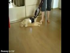 If my cat wasn't scared of the vacuum, she would love this