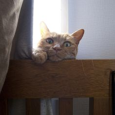 Must be for me. a href=http://www.flickr.com/photos/t-ohashi/4868172077/Cat Peeking from Behind Curtain/a by Flickr Creative Commons