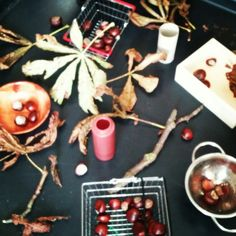 Conkers fallen leaves items for children to post them in