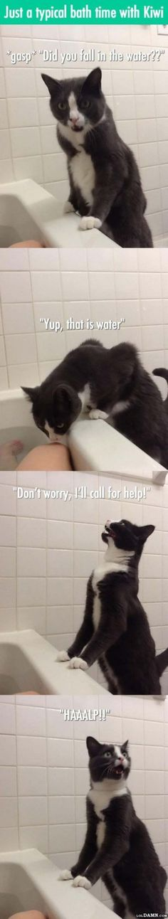 collection funny cats pics memes (500 pics) for June 2016 #funnycats #funnycatsmemes