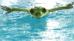 """A FROG SWIMMING BUTTERFLY  This is the making of a commercial done at Digital Magic Group for NTT Data, Japan.  Frog's Japanese name Kaeru is a pun as it can be read both as """"frog"""" (蛙) or the verb """"to transform, to change"""" (変える). The commercial here plays with words : The power of Frog / The power of change, and reflects the company's new direction . This CG commercial was done very quickly, less than a month ! :-)  My Website : www.jmontserrat.com the company…"""