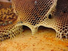 Architecture des abeilles