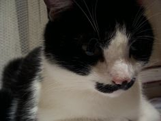 CAt with mustache :):)